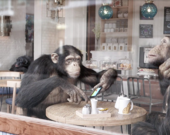 WINAMAX<BR>Monkeys